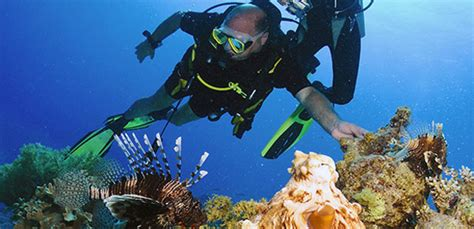10 Ways to Protect Coral Reefs! WeHeartDivingcom