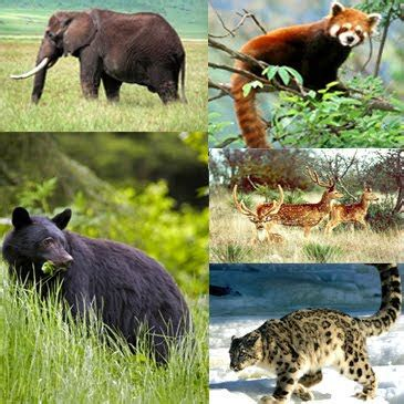 Discover India: Animals in India
