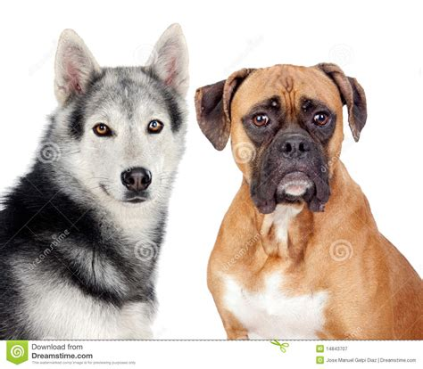 Two Dogs Of Different Breeds Royalty Free Stock