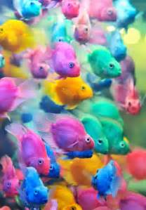 Colorful Fish Pictures, Photos, and Images for Facebook