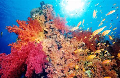 Scuba Diving in Egypt Red Sea Dive The World Vacations