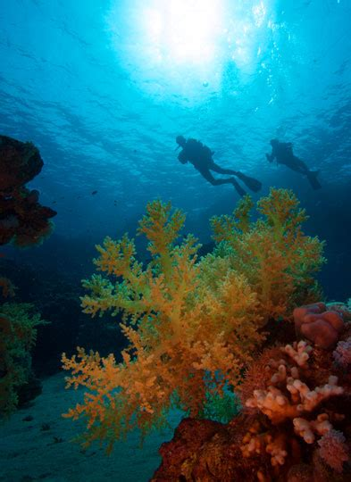 Diving in Sharm El Sheikh, Sinai, Egypt Dive The World
