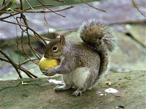 Do Squirrels Eat Bird Eggs Birds Of Prey