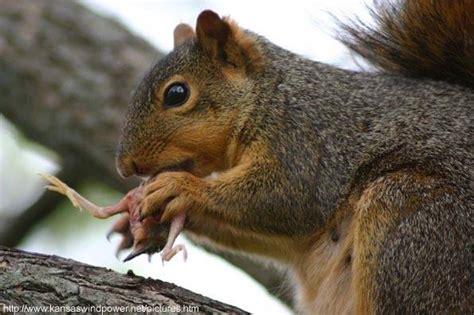 Do squirrels eat meat? Quora
