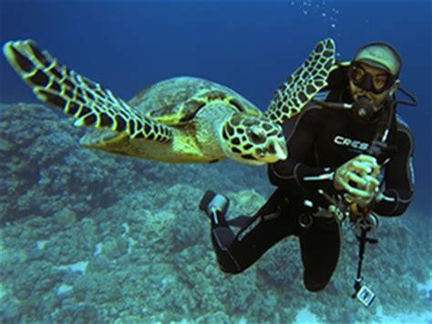 Dive Hurghada Scuba Diving in Hurghada Safe and Fun