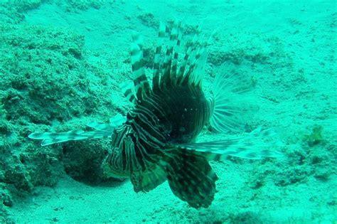 Ningaloo Reef Dive 1 Scuba Dive in Perth Australia